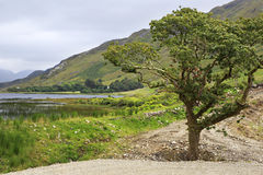 Beautiful National park Connemara. Stock Photo