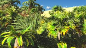 Beautiful natural background -African oasis 3d rendering. Beautiful natural background -African oasis Royalty Free Stock Photo