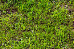 Beautiful natural background. Fresh spring green grass. Stock Photo