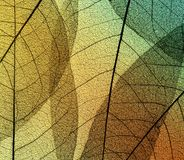 Beautiful natural background of leaf skeletons on transparent of stock photos
