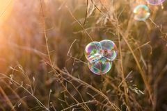 Beautiful natural background with soap bubbles. Autumn vibes. Beautiful natural background with autumn clear yellow meadow and soap bubbles brightly shimmer and stock images