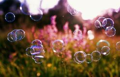 Beautiful natural background with summer clear green meadow with pink flowers and soap bubbles brightly shimmer and fly in the air stock image