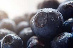 Beautiful natural background. Summer, spring concepts. Ripe and juicy fresh picked blueberries close-up in the gentle rays of the stock photos