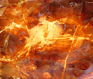 Beautiful natural Baltic amber. In bright colors Stock Photography