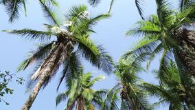 Beautiful natural beach with palm trees stock video footage