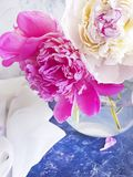 Beautiful natural blossom peony bouquet vase birthday on gray concrete stock images