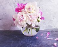 Beautiful natural blossom peony bouquet vase on gray concrete stock photo