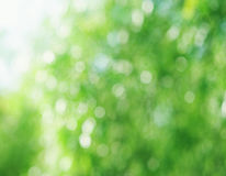 Beautiful natural bokeh Royalty Free Stock Photo