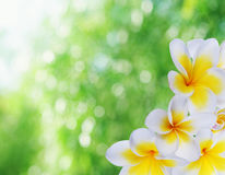 Beautiful natural bokeh Royalty Free Stock Images