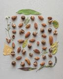 Beautiful natural collection of different types of pinecones and acorns with a leafy frame royalty free stock photography