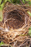 A beautiful natural empty birds nest in a tree Stock Images