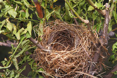 A beautiful natural empty birds nest in a tree Royalty Free Stock Photos