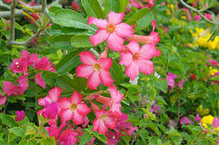 Beautiful natural flower Stock Image
