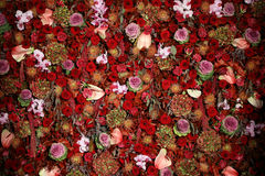 Beautiful Natural Flower Wall Texture. A beautiful natural flower wall texture background with red, purple, orange, yellow, and green sublime garden flowers stock images