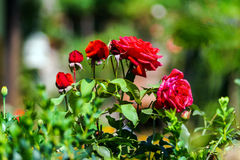 Beautiful natural flowers in private garden Stock Image