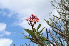 Flowers&Sky stock photo