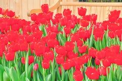 Beautiful natural flowers Royalty Free Stock Photos
