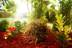 Beautiful natural garden with colorful plants Stock Photography