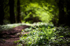 Beautiful natural green background Royalty Free Stock Photo
