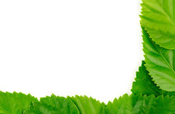 Beautiful natural green background texture with white copyspace Stock Photo