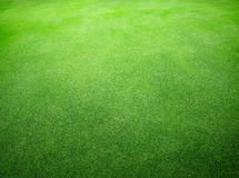 Beautiful natural  green grass texture Royalty Free Stock Photos