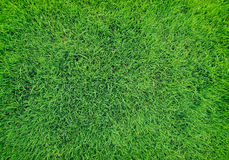 Beautiful natural green grass texture Royalty Free Stock Photography