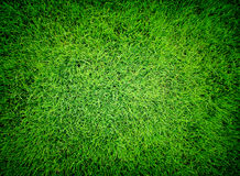 Beautiful natural green grass texture royalty free stock images