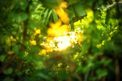 Beautiful Natural green leaf with sunset and abstract blur bokeh Stock Photos