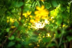 Beautiful Natural green leaf with sunset and abstract blur bokeh Stock Image
