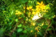 Beautiful Natural green leaf with sunset and abstract blur bokeh Royalty Free Stock Photos