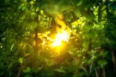 Beautiful Natural green leaf with sunset and abstract blur bokeh Royalty Free Stock Images