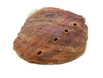 Beautiful natural haliotis shell on a white background isolated royalty free stock photo