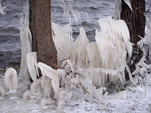 Beautiful Natural Ice Ornaments on the Trees Stock Photos