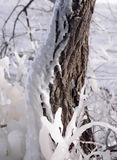 Beautiful Natural Ice Ornaments on the Trees Royalty Free Stock Photography