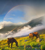 Beautiful natural landscape with animals. Horses in mountain valley. Beautiful natural landscape with animals Royalty Free Stock Photo