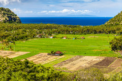 Beautiful natural landscape, green rice field on the background ocean, mountain and blue sky Stock Photography