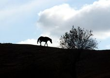 A backlight of a spanish horse and a tree. stock images
