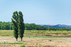 Two poplars in steppe Royalty Free Stock Photos