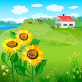 Beautiful natural landscapes. With house and sunflowers Royalty Free Stock Photo