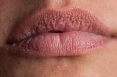 Beautiful natural lips of an adult woman royalty free stock photo