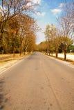 Beautiful natural local road. Beautiful natural tree land local road Royalty Free Stock Images