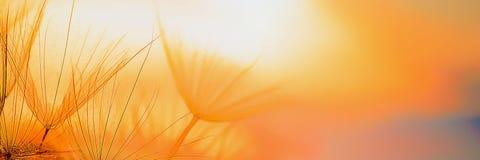 Beautiful natural panoramic background. Setting sun. Close-up stock photos