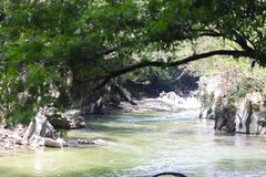 Beautiful natural river in green forest Royalty Free Stock Photos