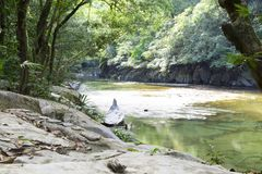 Beautiful natural river in green forest Stock Photos