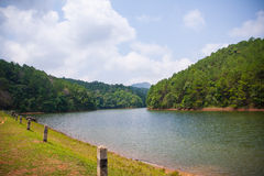 Beautiful natural scene of greenery forest and lake Royalty Free Stock Images