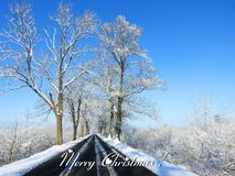 Merry Christmas card done using trees and road in winter , Lithuania royalty free stock photo