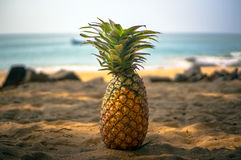 Beautiful natural still life of pineapple on the Golden sand in the shade of palm trees. On the sea background stock images