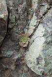 Beautiful natural stone in Gran Canaria Stock Photo
