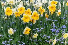 Beautiful natural summer background with flowers at sunny day.  stock photography
