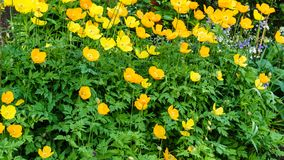 Beautiful natural summer background with yellow flowers at sunny day. Beautiful natural summer background with yellow flowers at sunny day stock image